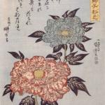 歌川国芳 唐獅子(牡丹花弁)