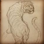 #tiger #tigertattoo #虎 #下書き